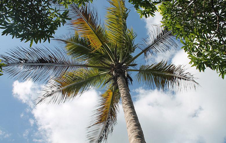 tropicsafe-2